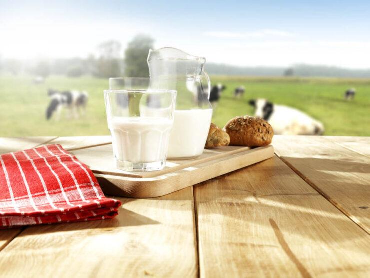 Animal-Milk-Based Baby Formula
